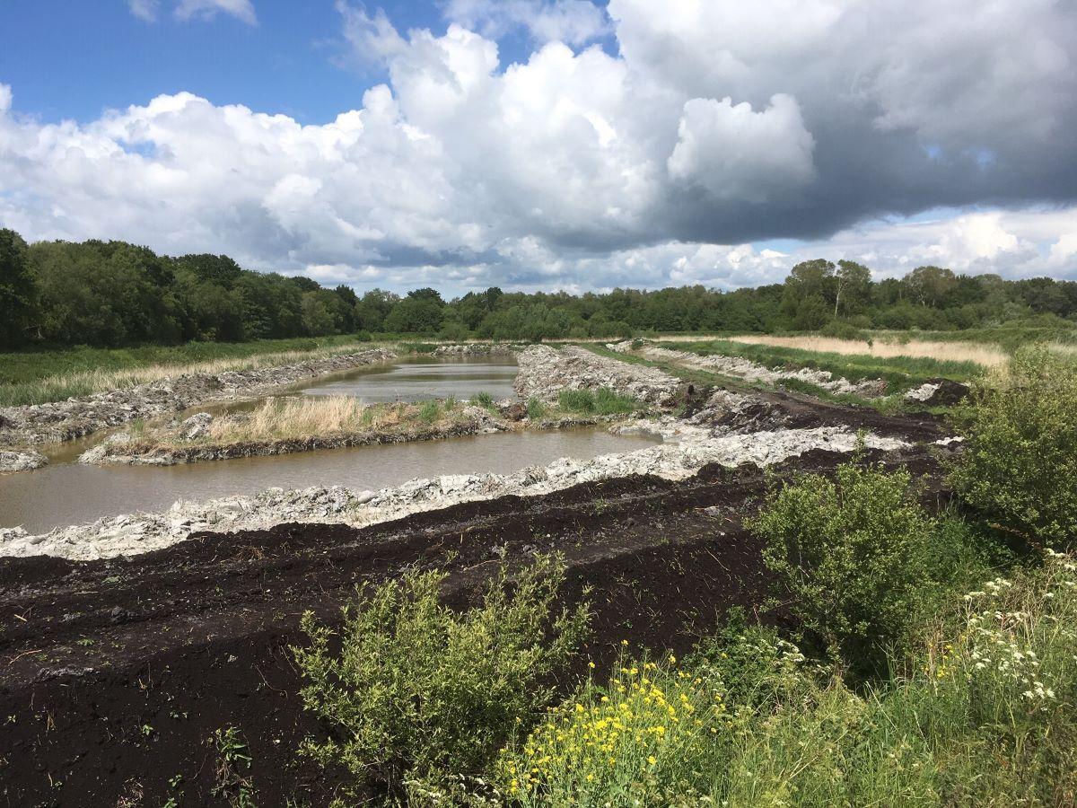 restored habitat from oold peat workings, Somerset